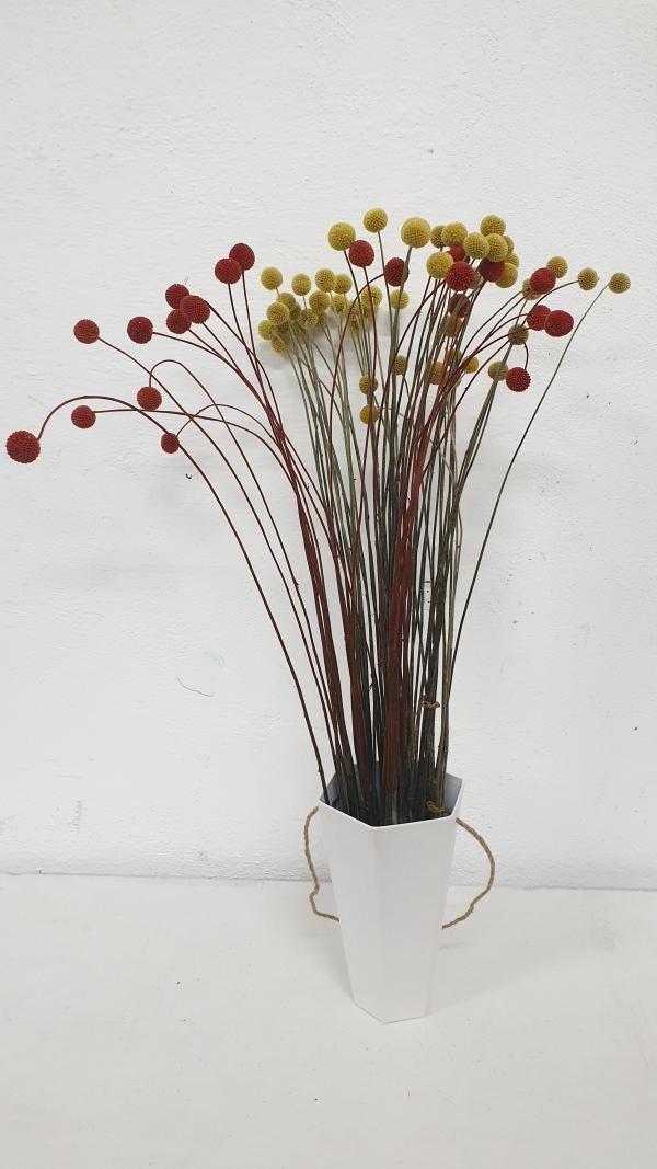 Craspedia | Petal Flowers